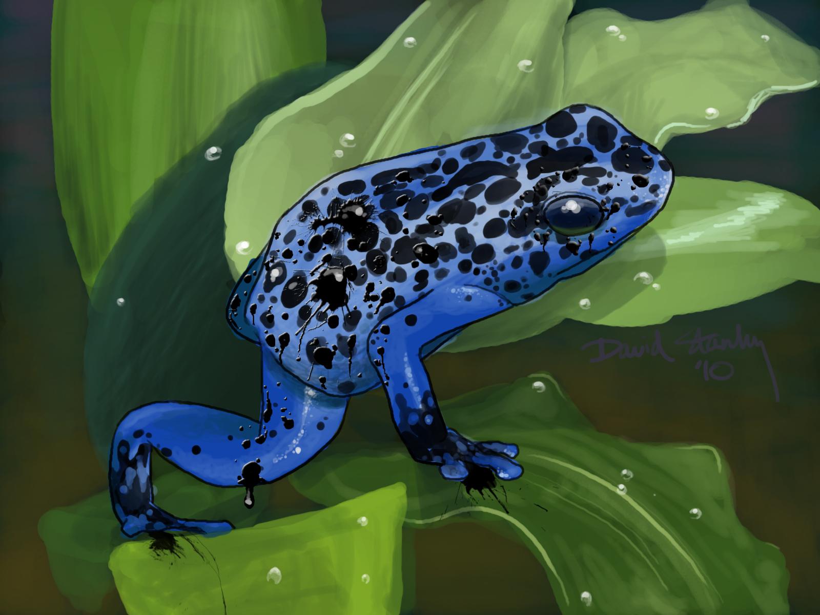 Poison Ink Frog