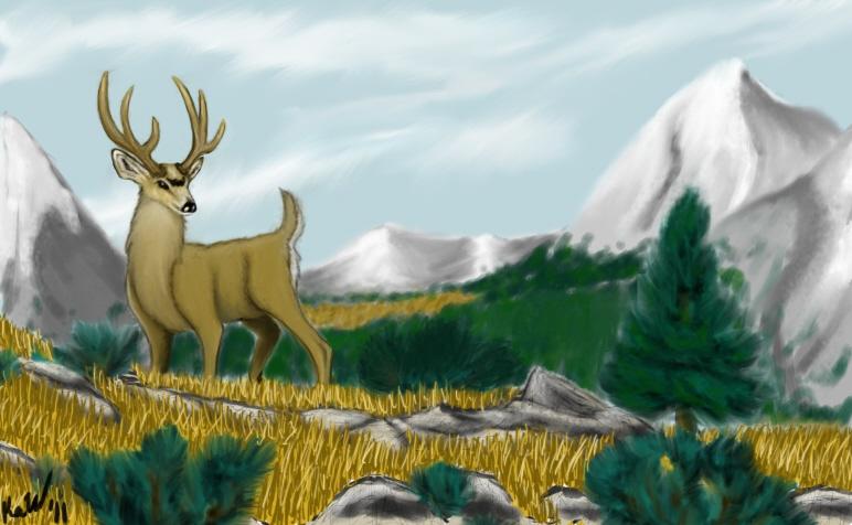 Mountainous Mule Deer