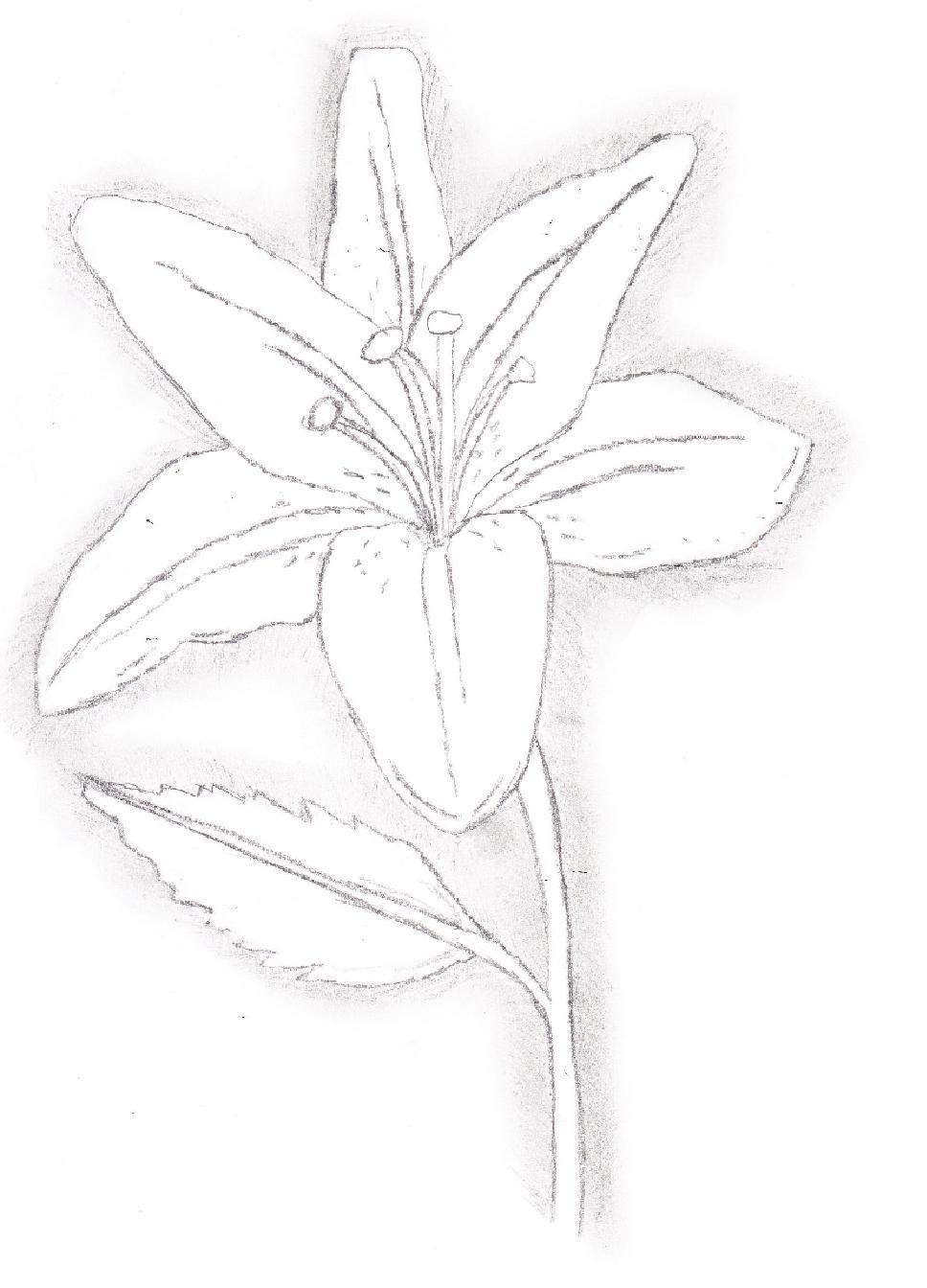 White Lily for Kelsie