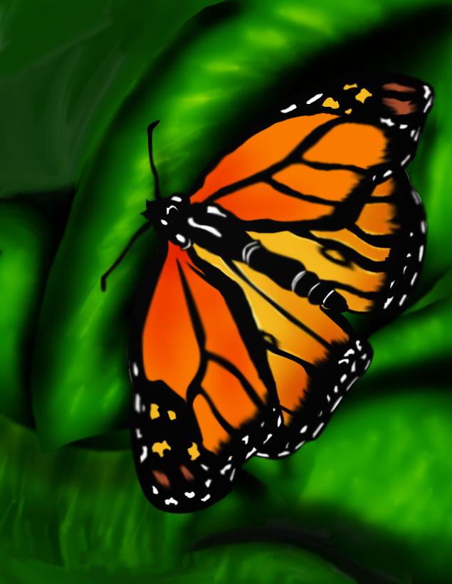 Butterfly Wacom Test