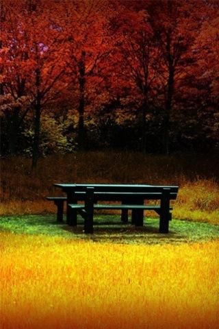 forest picinc bench