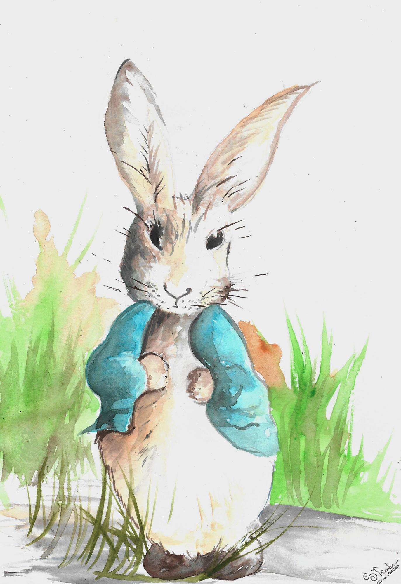 Peter rabbit 27/11/2020