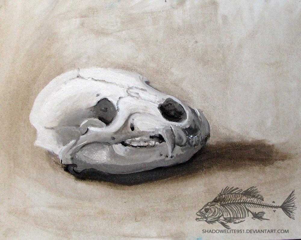 Lowly Bear Skull