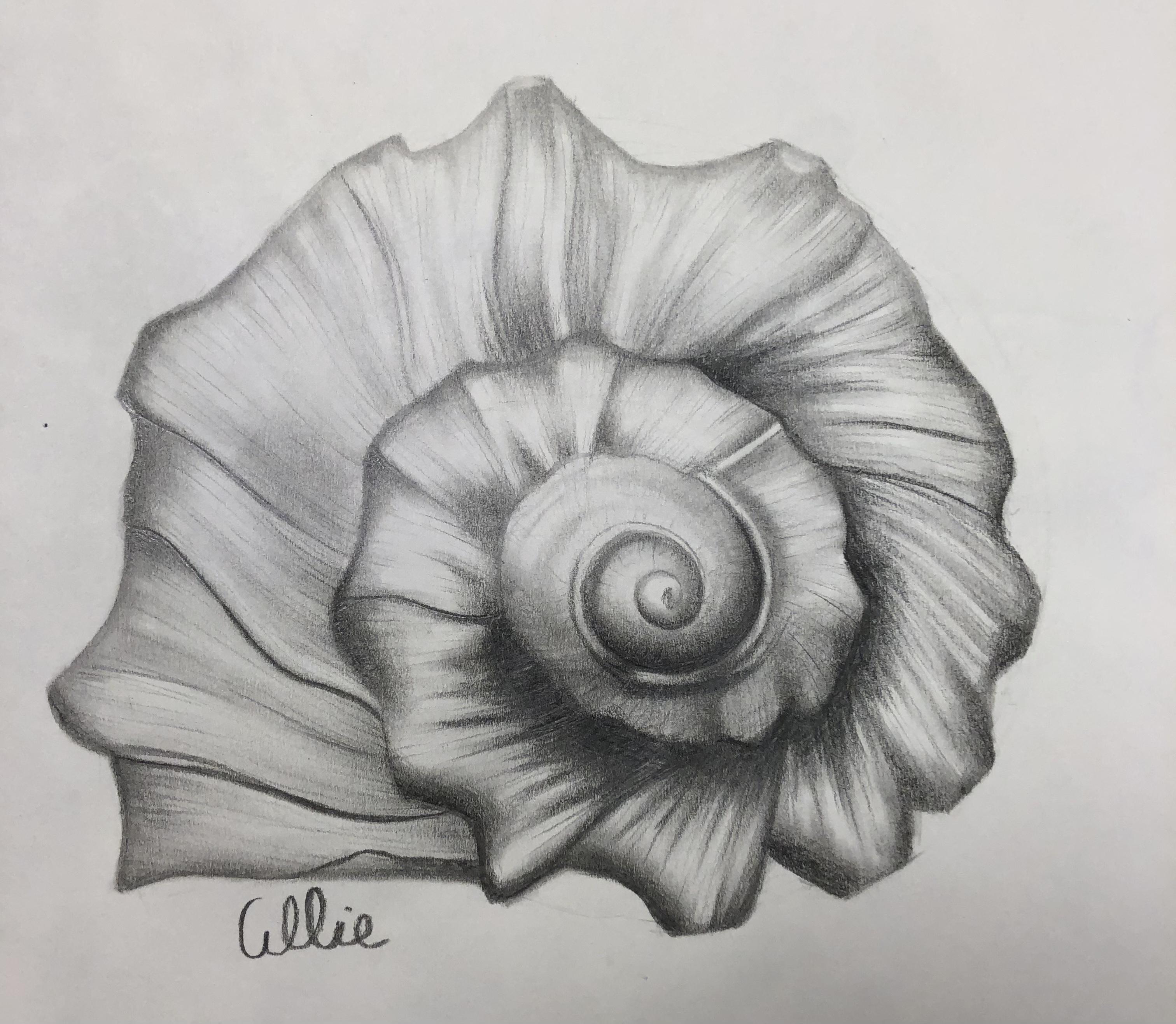 Sketchbook 12: Seashell
