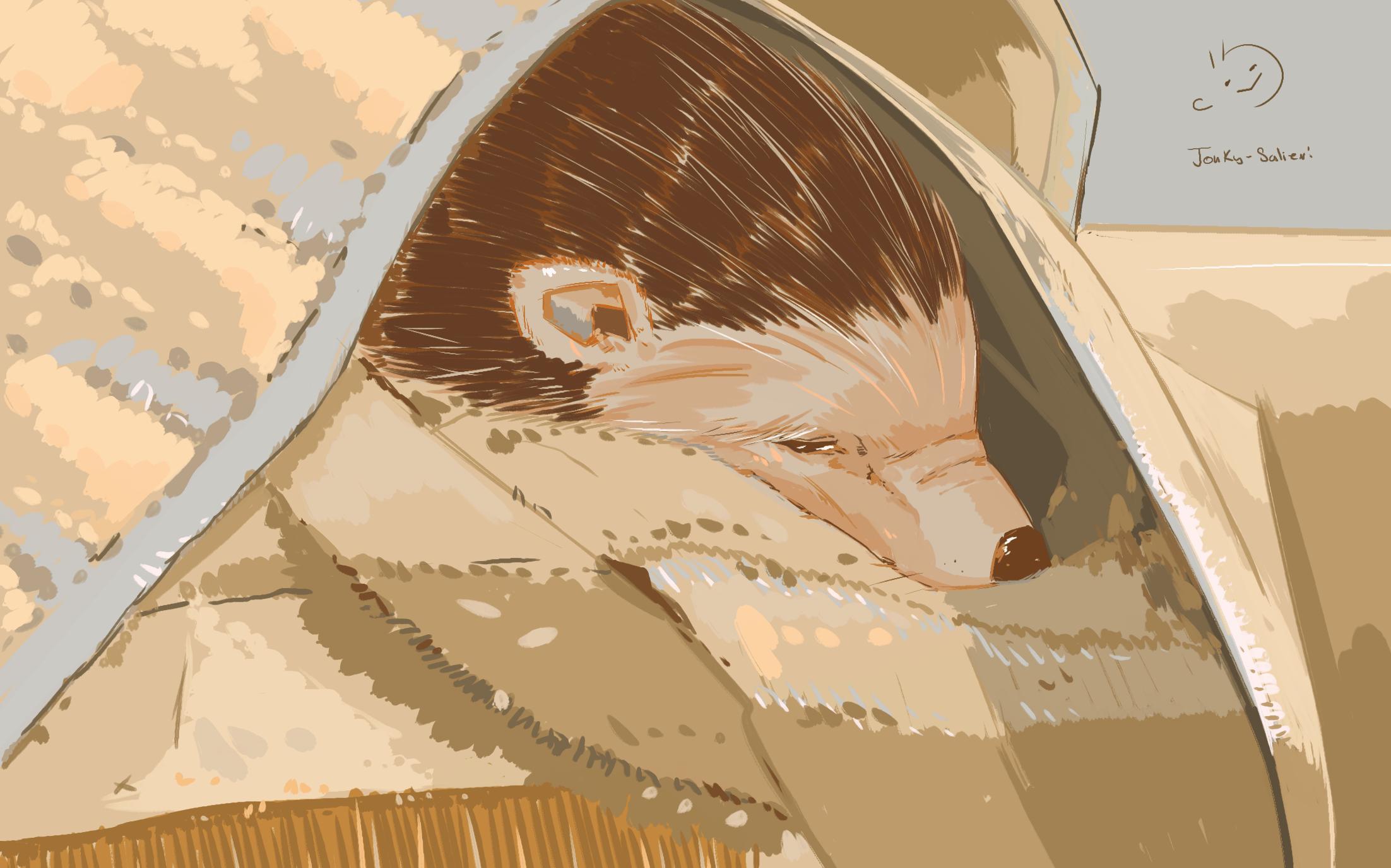 Hedgehog Portrait #2