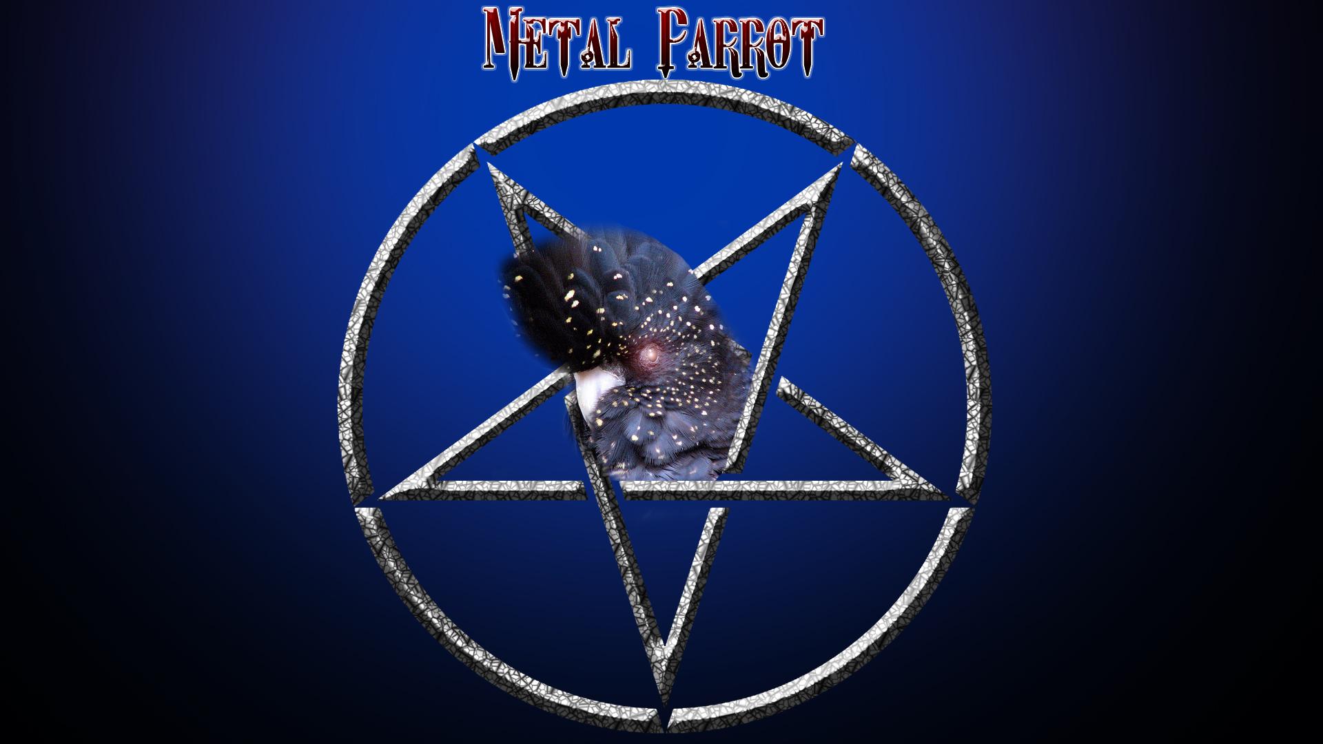 The Metal Parrot blue!