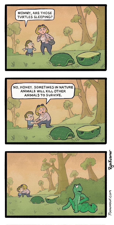 Turtle Shells