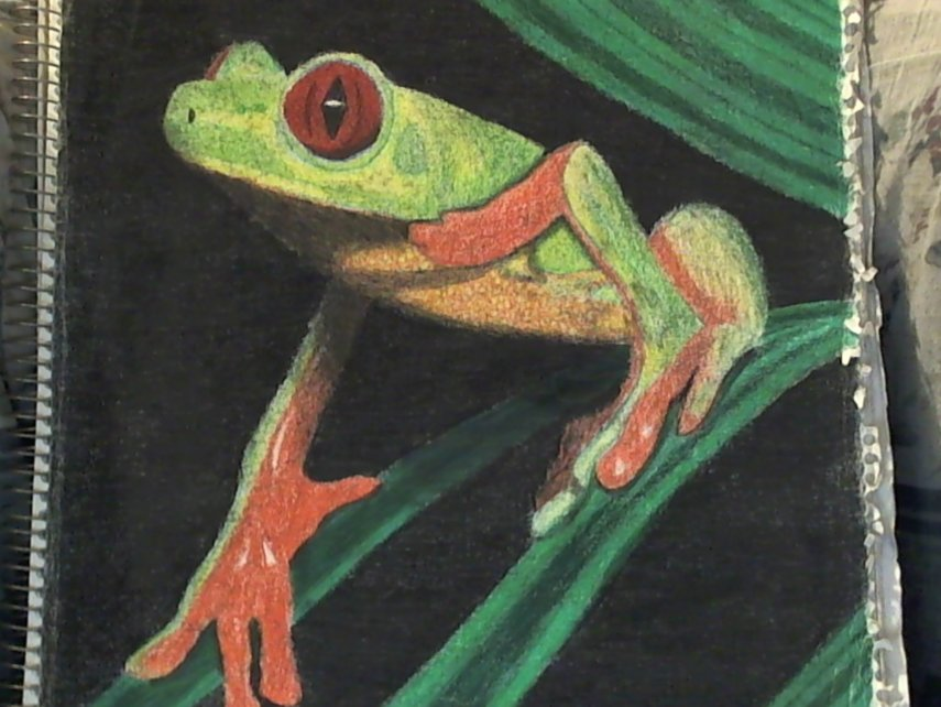 National Geographic Frog