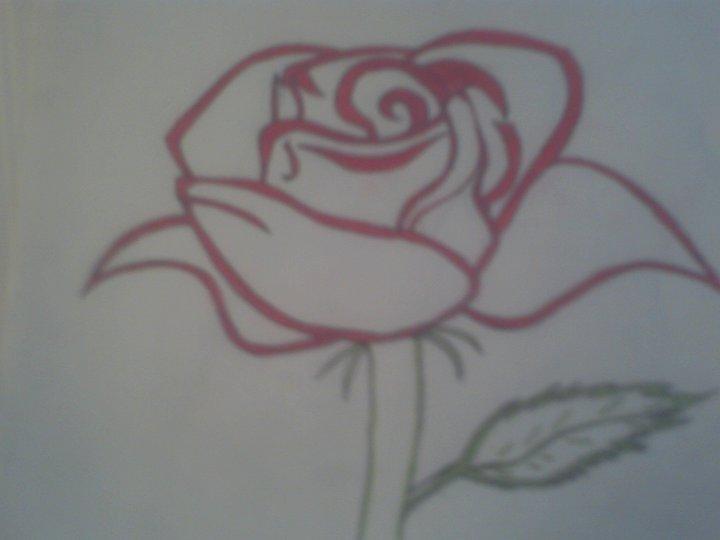 Red Rose 5/12/11