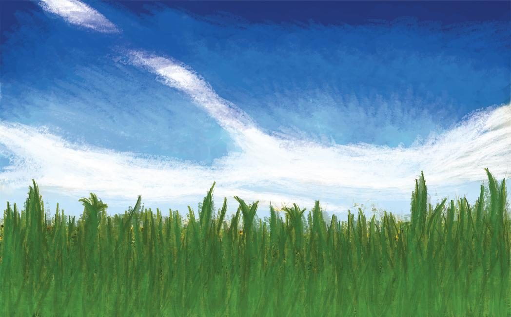 Grass N' Sky