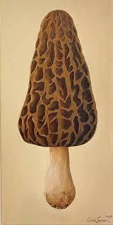 Morel Mushroom Painting
