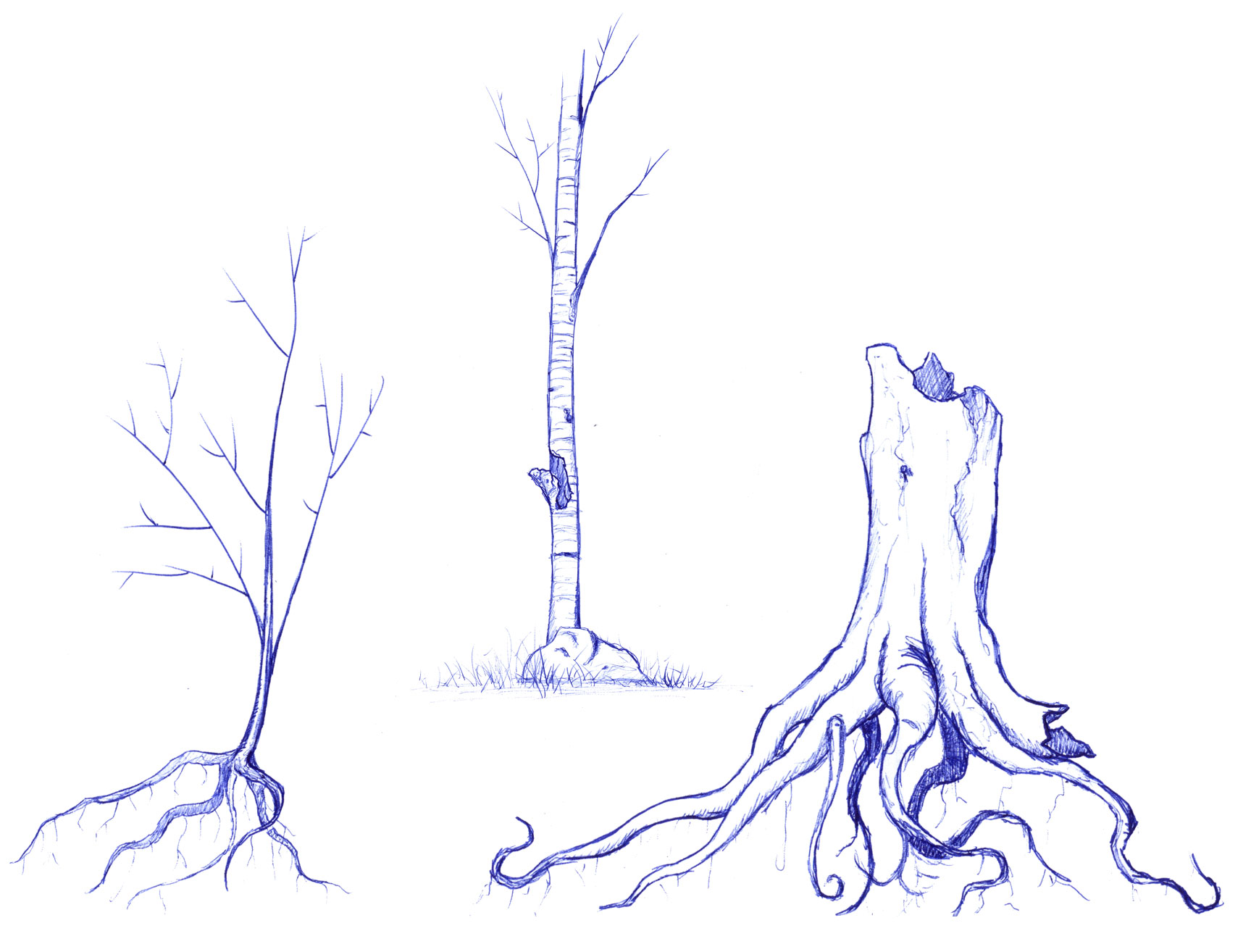 Tree Study & Exploration