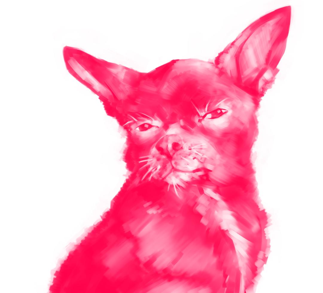 Tito Dog