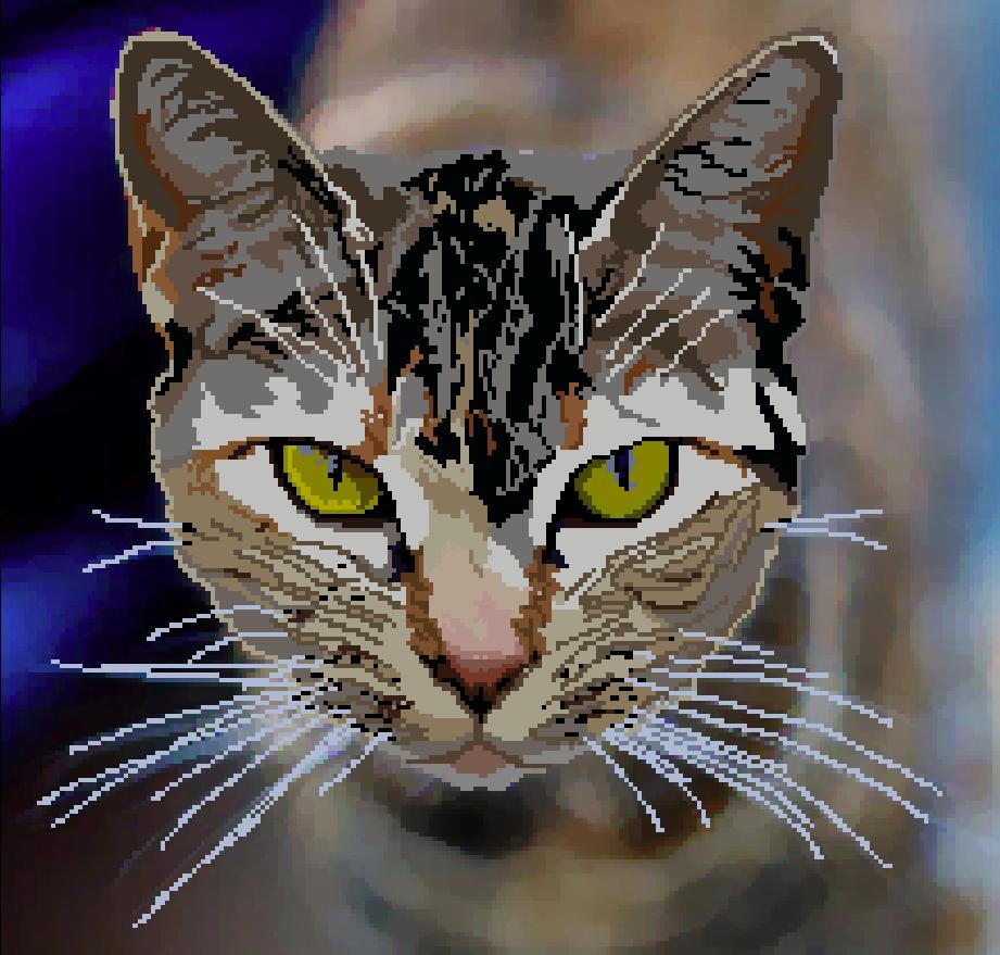 Cat In Focus