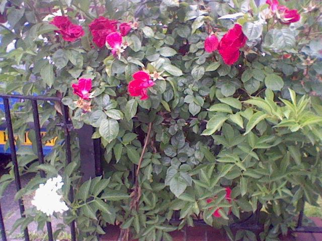 pretty flowers >w<