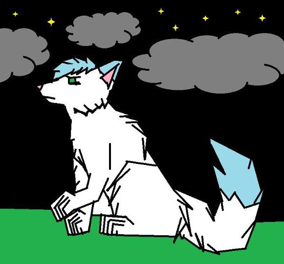 dark night wolf