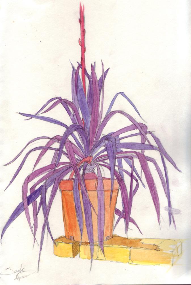 Purple Yucca