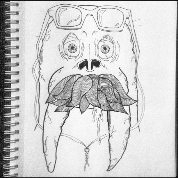 Summer Walrus