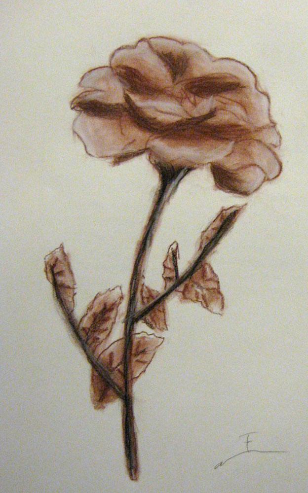 Conte Flower