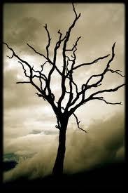 Dead tree1