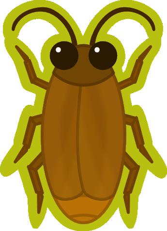 DD Roach
