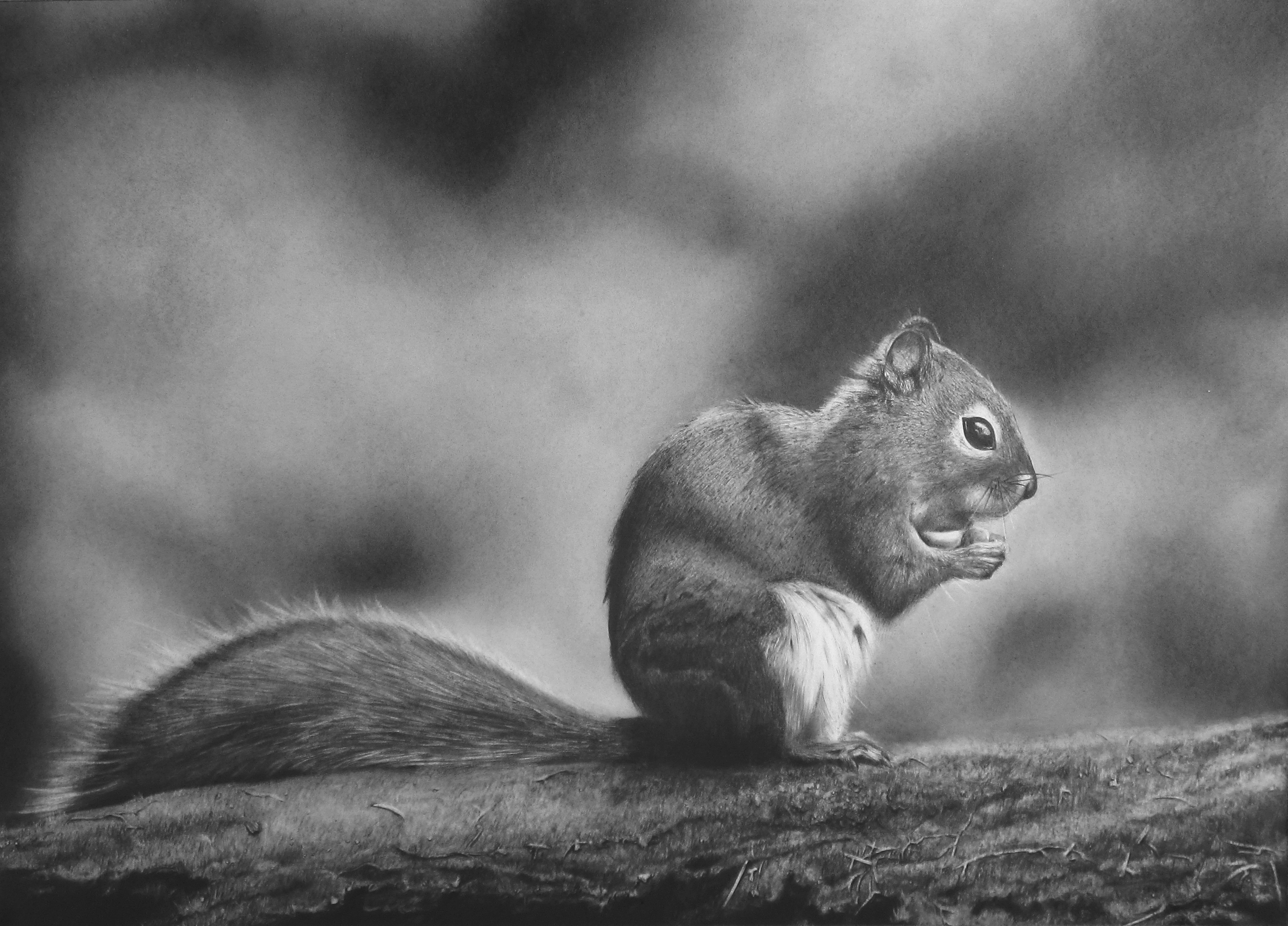 Squirrel On Branch Drawing