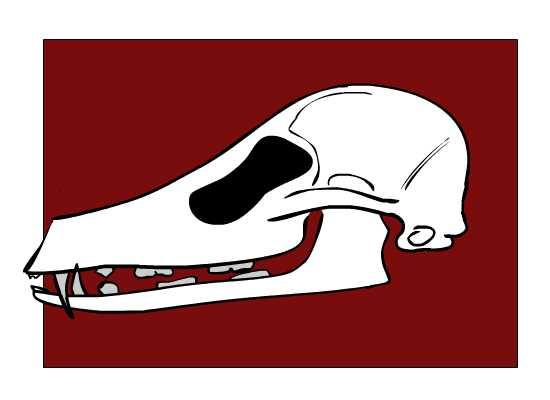 Fox Skull Deformation
