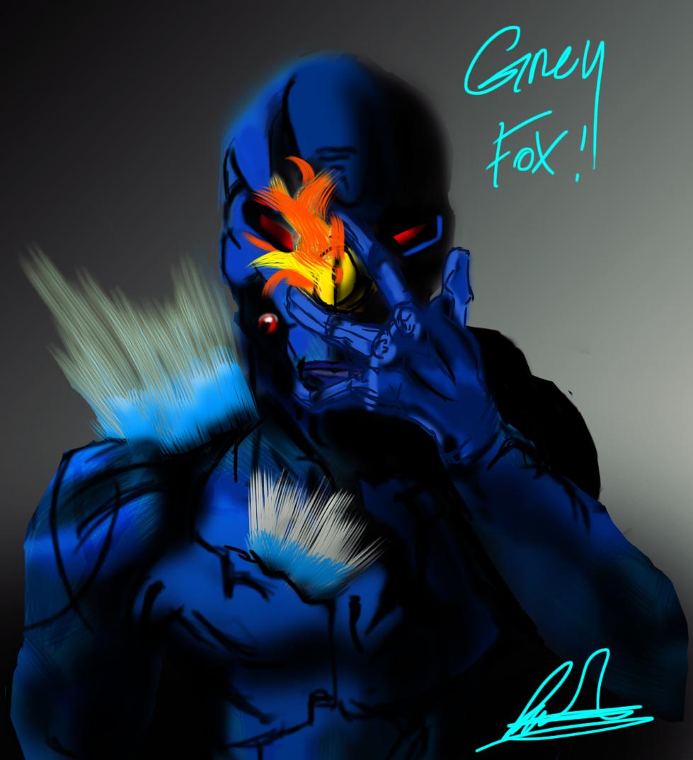 Grey FOX!!
