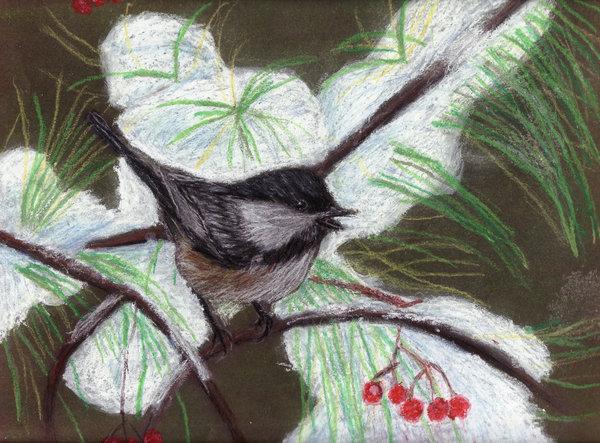 A bird of winter