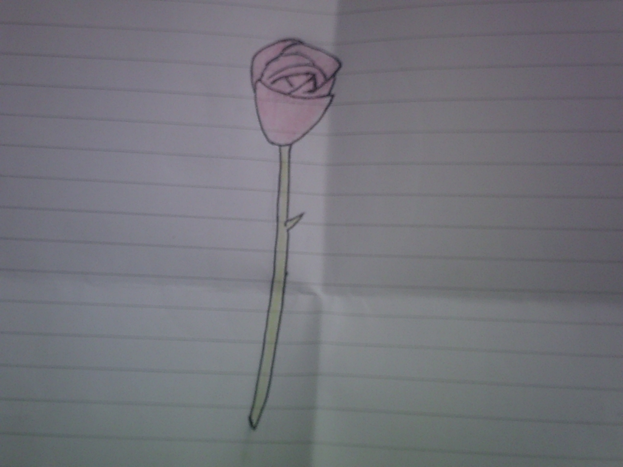 A red rose that i drew