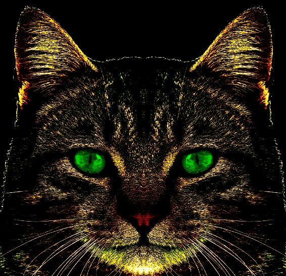 Hunter The Housecat
