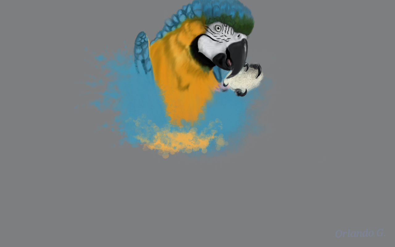 My sister's Macaw.