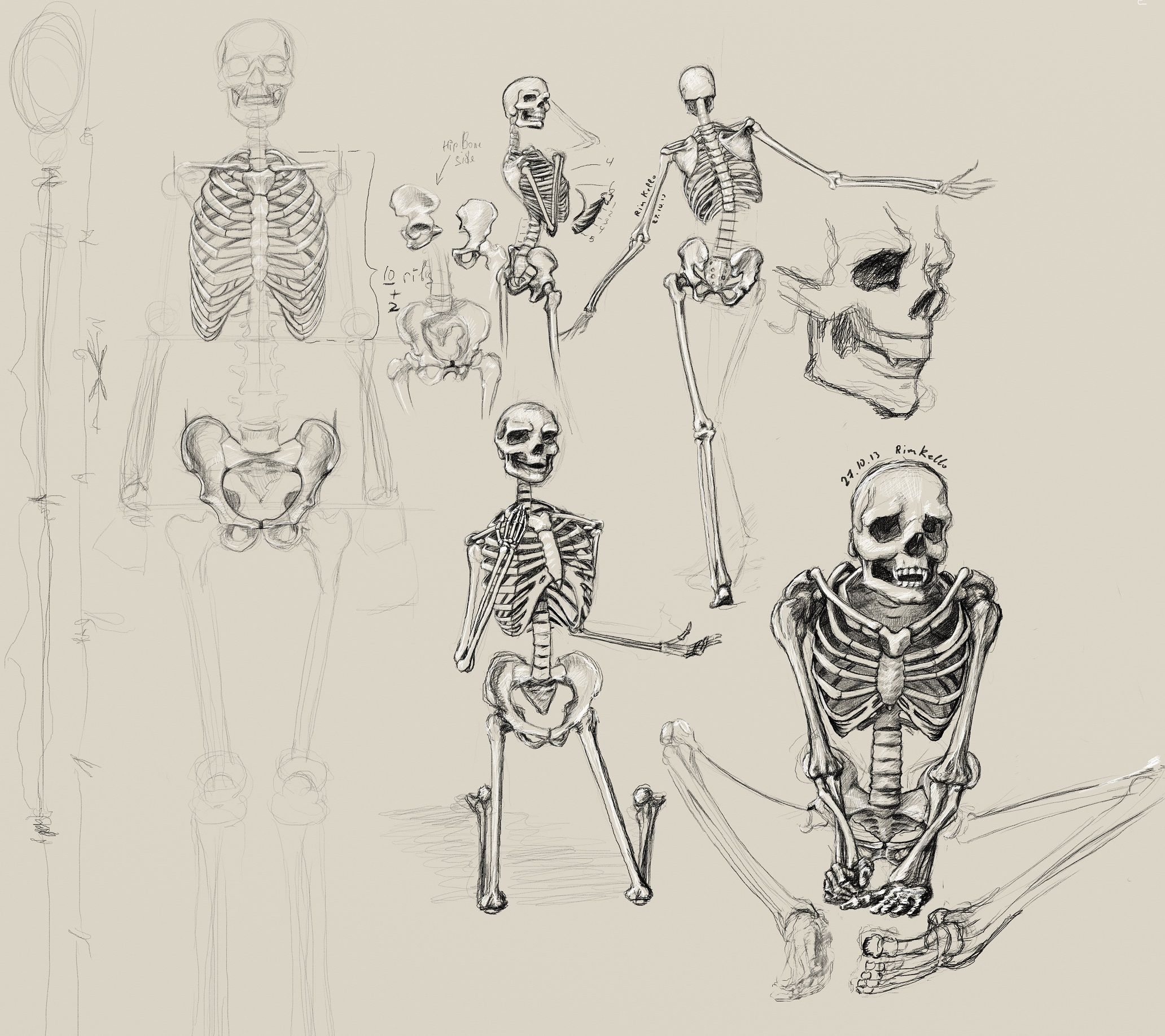studying of anatomy-bones(p1)