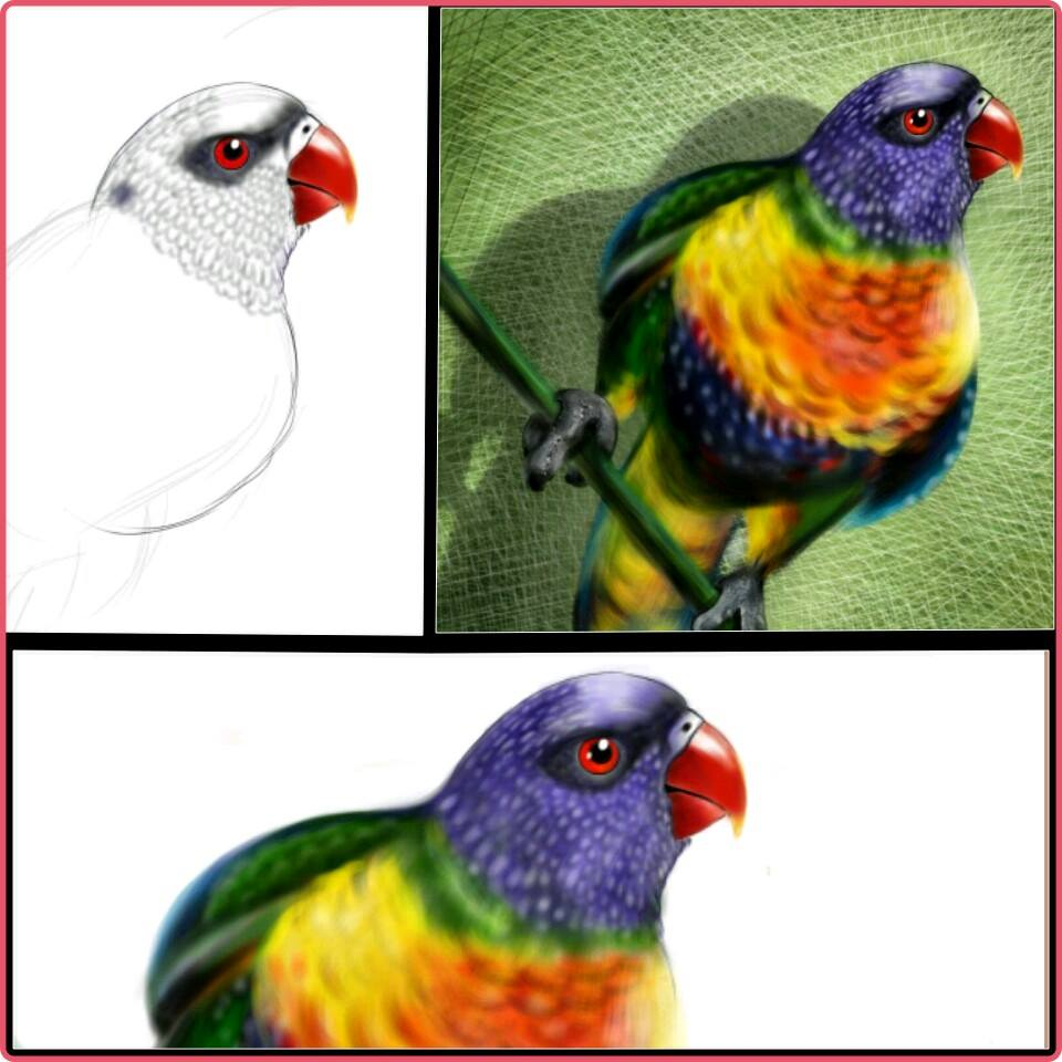 PaPagei - Parrot Drawing