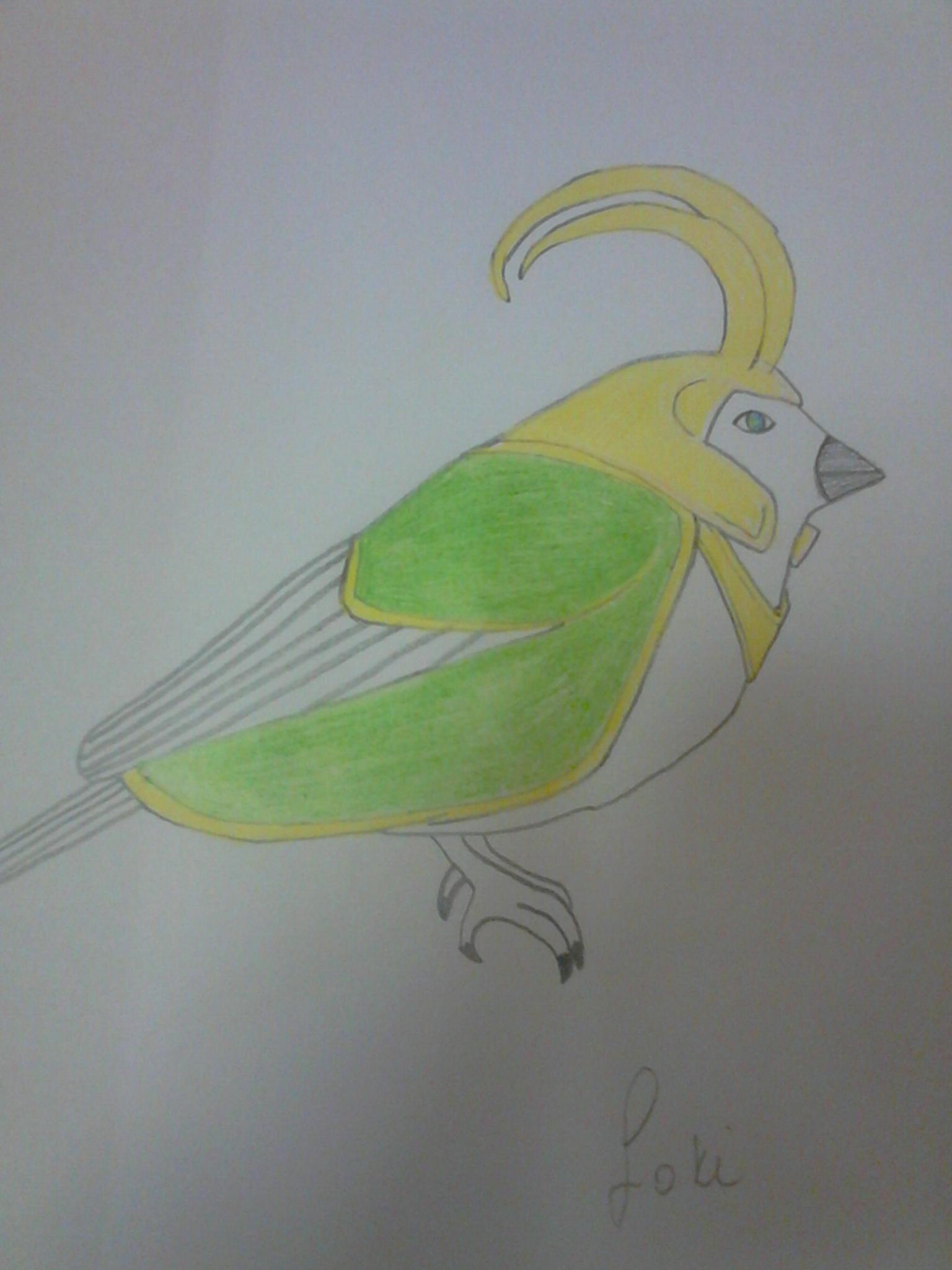 Loki Bird