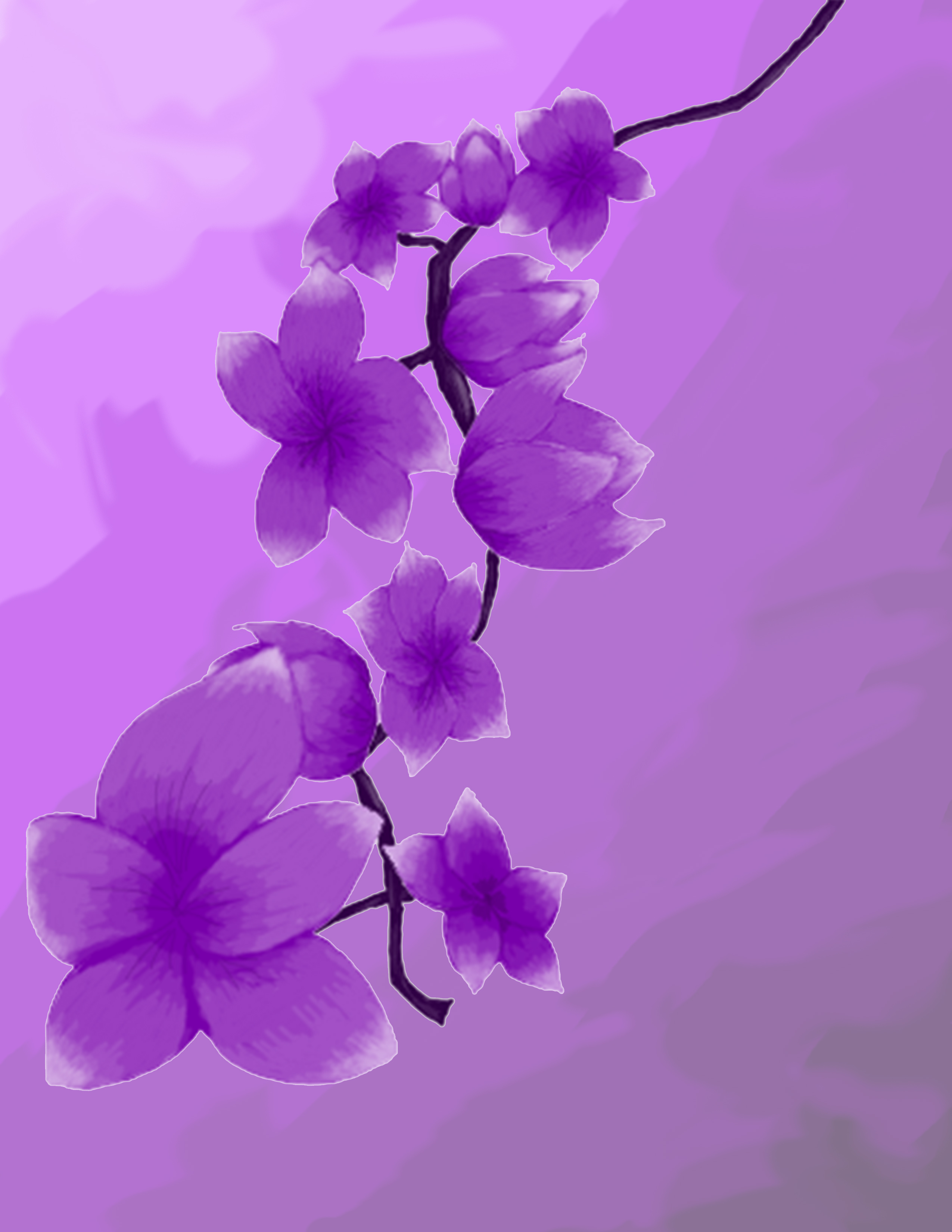 Violet Flowers from Mr. Wilson