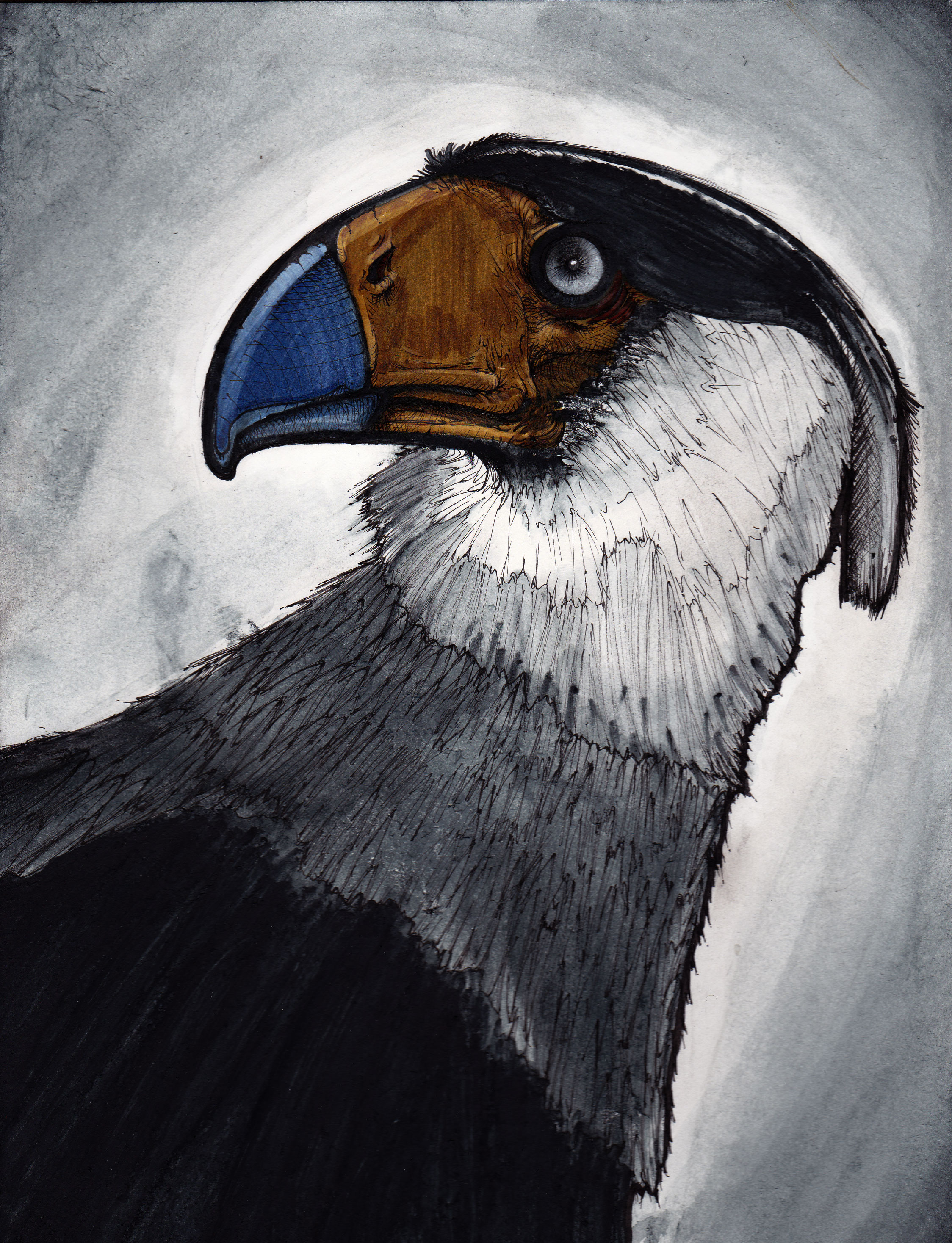 Bird of Meh