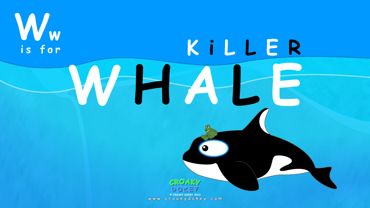 Ww is for WHALE - Killer WHALE