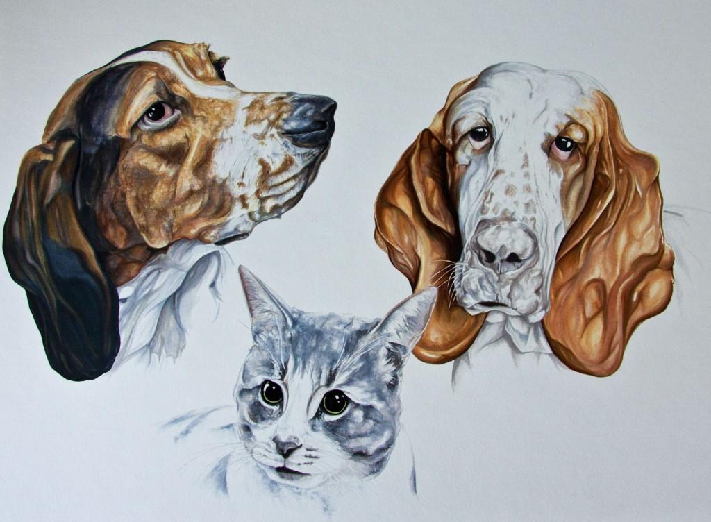 Basset Hounds & Cat