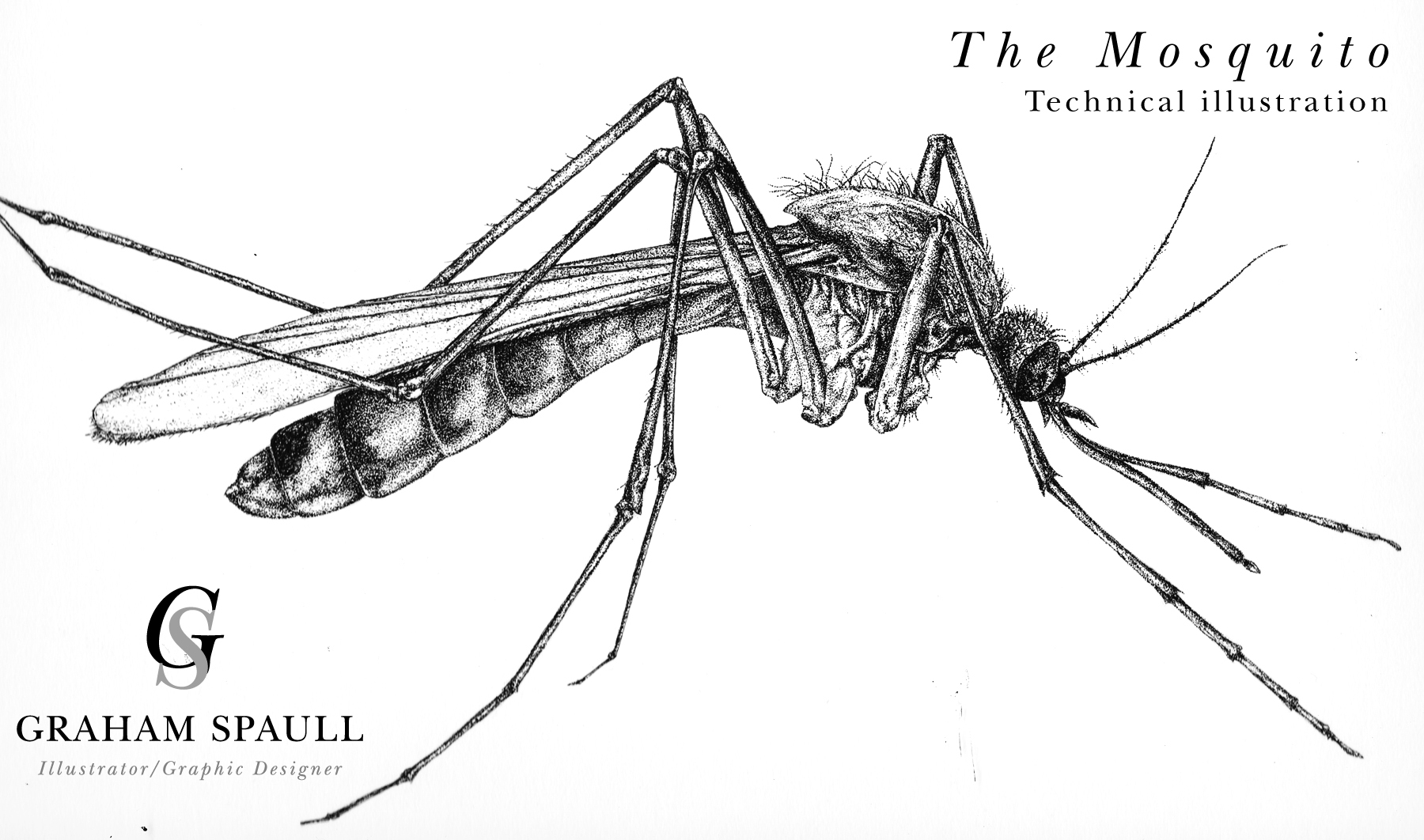 The mosquito (pointillism)