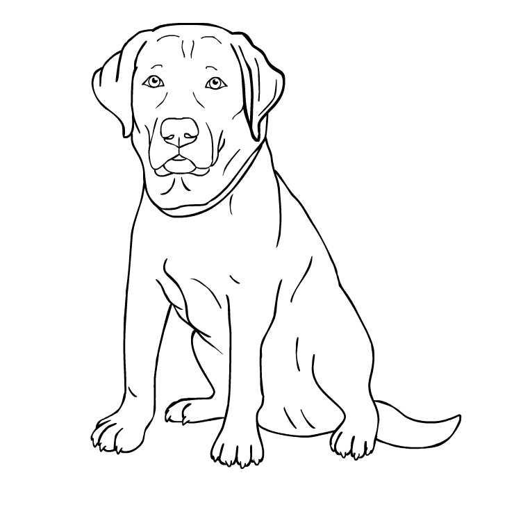 Buster the dog (outline)