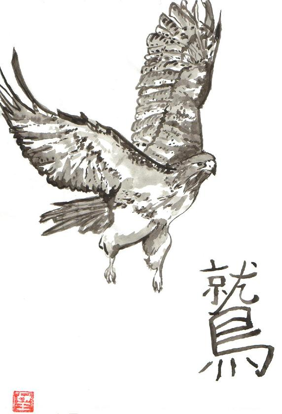 Hawk in Black Ink Wash