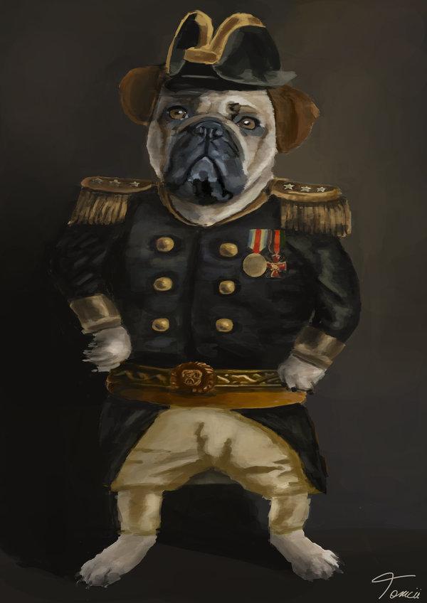 Admiral Pug