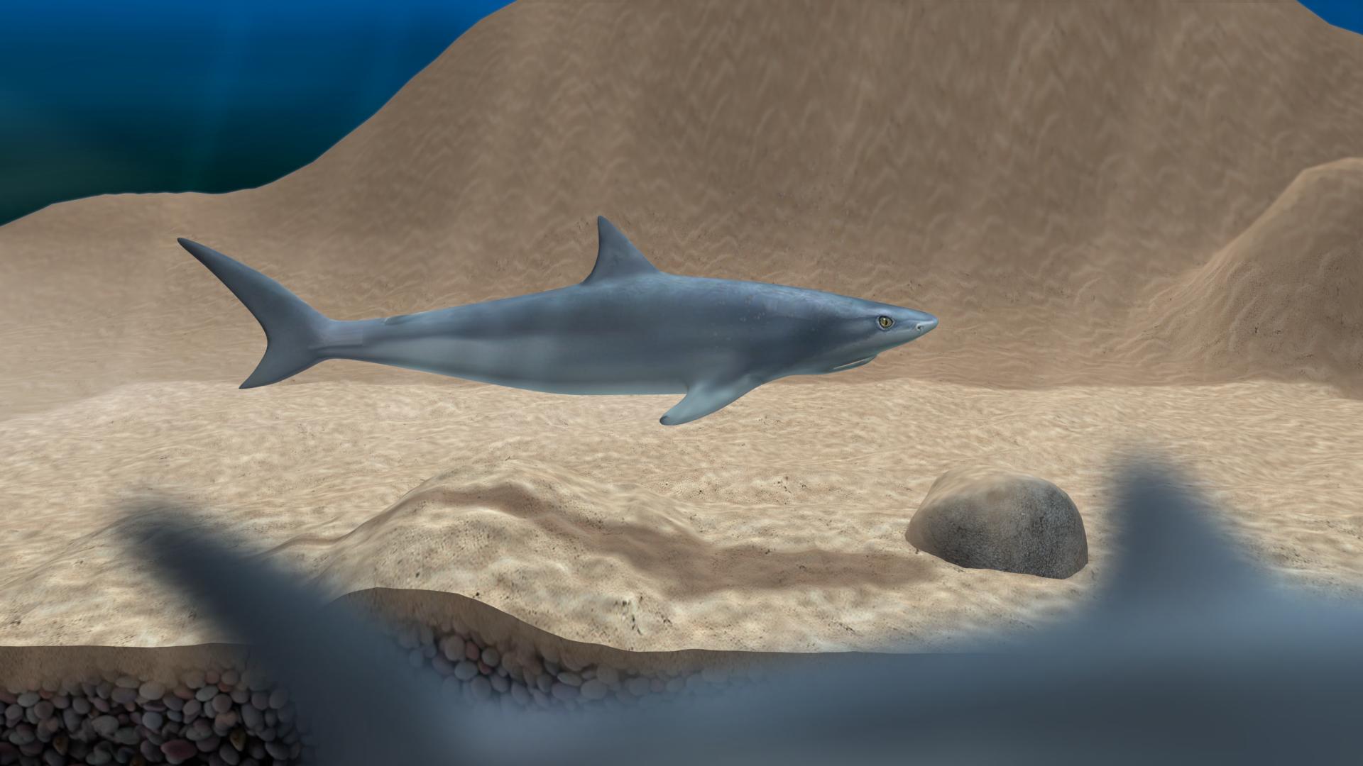 Shark game concept