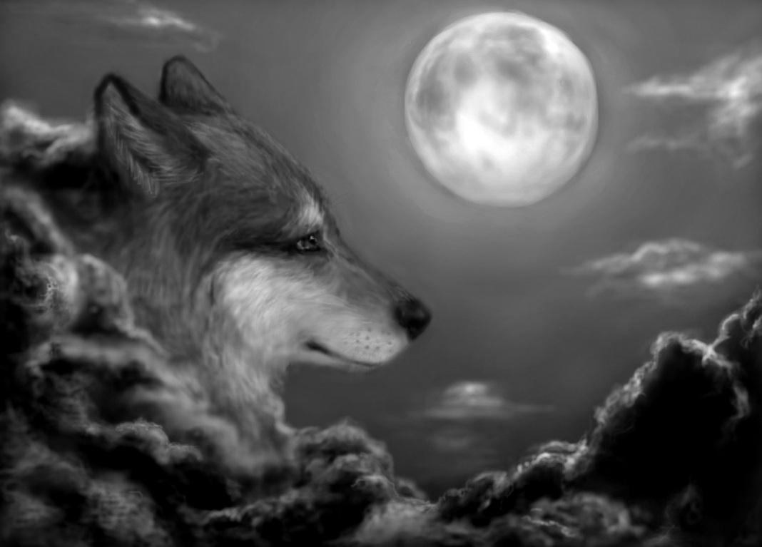 Wolf, redraw
