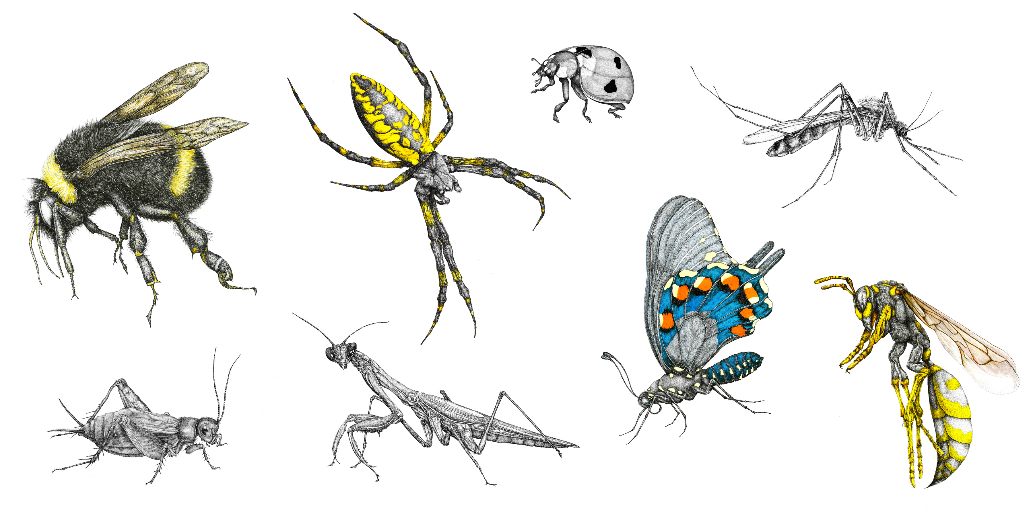 Technical Insect Collage