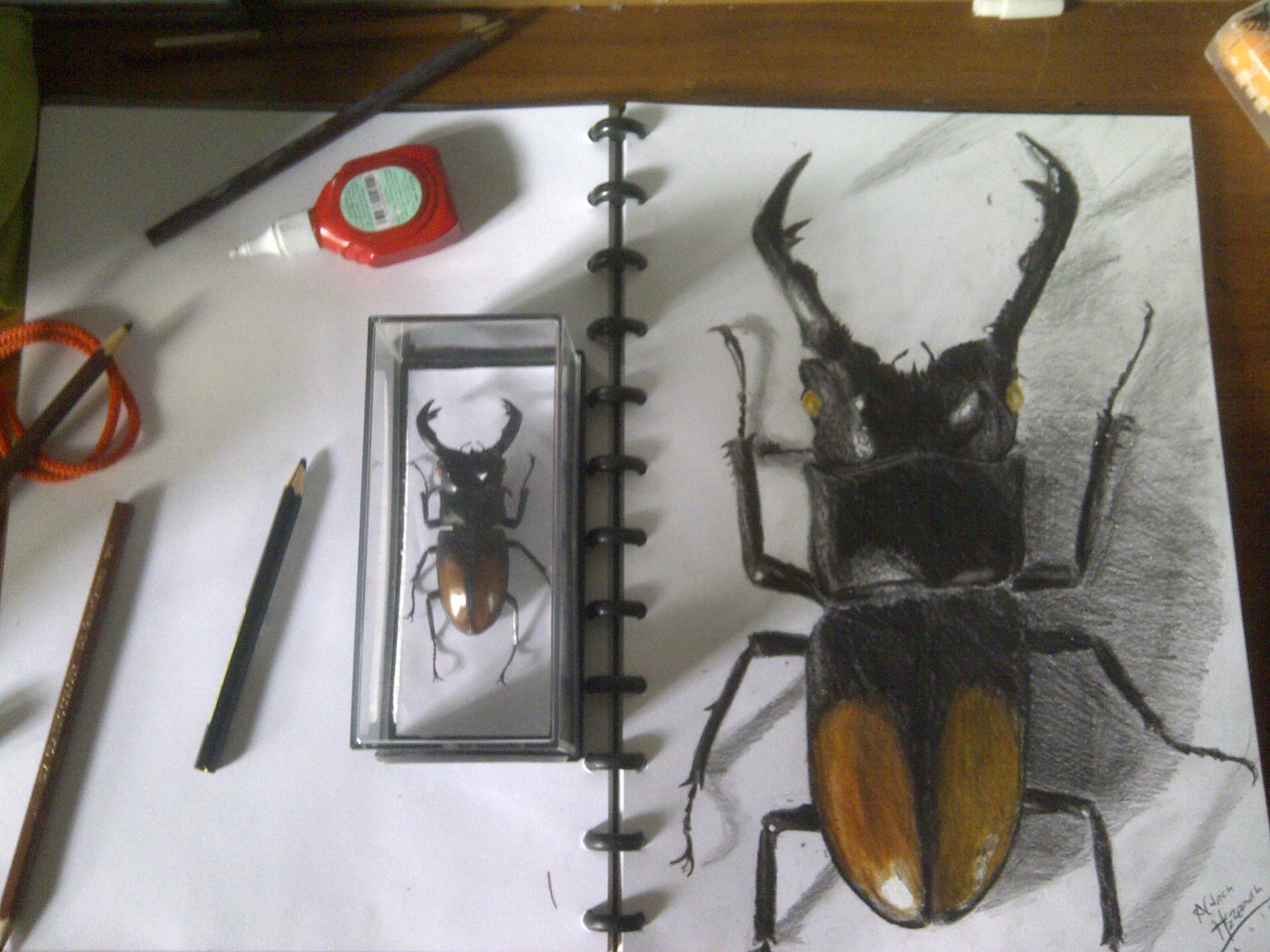 Stag beetle-Hexarthrius parryi
