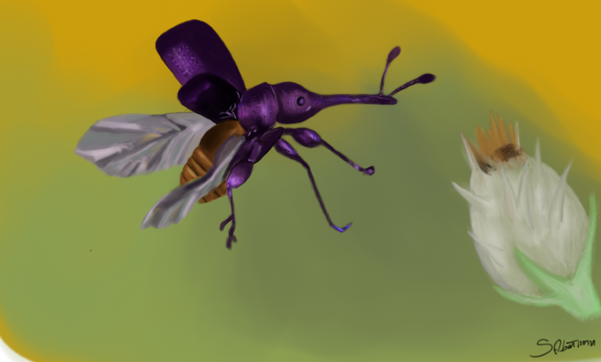 some insect