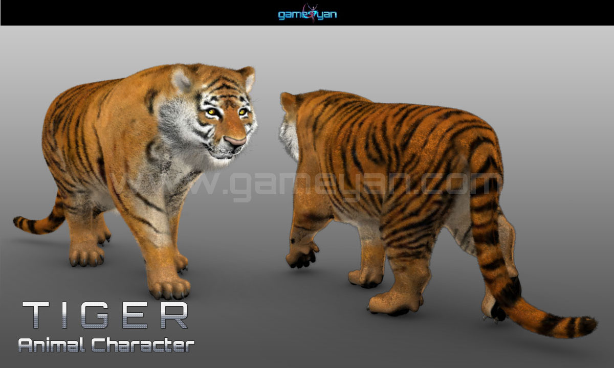 Tiger Character Animation