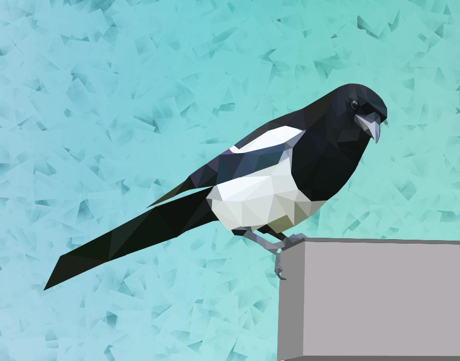 Exiguous Magpie